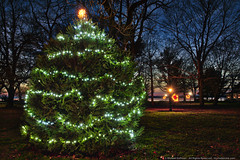 'Tis the Season (mhoffman1) Tags: park christmas holiday festive lights star us unitedstates dusk seasonal maryland christmastree oxford hdr decorated a7r aurorahdr