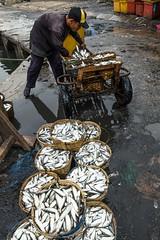 IKAN (eamediasyn) Tags: laut ikan lampung nelayan kapal kelautan perikanan