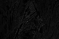 Eisblumen Textur (gripspix (catching up slowly)) Tags: texture pane eisblumen scheibe textur frostwork 20151208