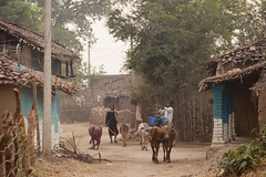 Rural village (wietsej) Tags: rural village kawardha chhattisgarh india sony a900 sal70200g 70200 tribal street cattle
