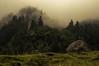 Kleinwalsertal (Netsrak (on/off)) Tags: mist fog nebel mountain mountains berg berge alps alpen kleinwalsertal baum bäume mittelberg vorarlberg österreich at tree trees outdoor