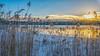 #AM Sunrise on a frozen lake - Sonnenaufgang an einem gefrorenen See (ralfkai41) Tags: schwepnitz sonne reflection schilf outdoor lake refektion snow hdr lakeside gefroren ice schnee landscape landschaft see wasser ufer kalt cold sun dämmerung sunrise morning eis wasserspiegelung water winter spiegelung sonnenaufgang frozen morgen natur nature weed dawn