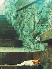 Cat 13 @specialcatsedition (Robert Krstevski) Tags: robertkrstevski robertkrstevskiblogspotcom cat cats catsphotography specialcatsedition catlovers catsedition pet pets petlovers gato gatos gata gatti кошка котка кошки котки la chatte kitty kitten kittens kitties cute cuteness мачка