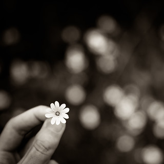 Un bokeh de fleurs