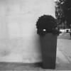 Artificial pot plant (Rolleican Alan) Tags: rolleiflex28f rolleiflex bw ilfordfp4plus street londonstreet hydeparkcorner