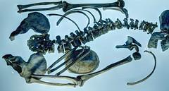 prehistoric past (eetee2007 (300K, I thought I´d never make it.)) Tags: bones knochen skelett skull schädel archeology archäologie museum