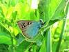 Butterfly 1115 (+450000 views!) Tags: butterfly borboleta farfalla mariposa papillon schmetterling فراشة