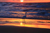 Egretta Garzetta at sunset - Tel-Aviv beach.   My dear friends, I wish you a Merry Christmas & All the best ! Greetings from Tel-Aviv ! (Lior. L) Tags: egrettagarzettaatsunsettelavivbeach egrettagarzetta sunset telaviv beach egrettagarzettaatsunset telavivbeach israel travel travelinisrael nature beaches sea seascapes reflection reflections shadows silhouette