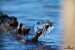 A-LUR_5590 (ornessina) Tags: trasimeno umbria byrd uccelli aironi cormorani toscana va orcia