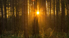 Late afternoon sunset, Blidworth Woods - 28-12-2016 (kevaruka) Tags: blidworthwoods nottinghamshire eastmidlands sherwoodforest decembersun december 2016 winter sun sunshine sunny sunset mist misty countryside 28122016 kevinfrost colour colours trees nature cold frost composition england canon canoneos5dmk3 canon5dmk3 canonef24105f4l 5d3 5diii 5d 5dmk3 christmas xmas rich warm red orange green blue wideangle uwa