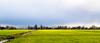 Holland in January (Eduard van Bergen) Tags: holland niederlande netherlands dutch nederland groot ammers alblasserwaard molenwaard liesveld liesvelt still picture photo foto photograph road path fields trees woods outdoor landscape riet plant grass field grassland plain farm boerderij cattle lifestock vee farmer wife apron culture milk cheese butter living life working work serene stroll tree park sky frau antje horizon graafland bosom meadow wei gras geese goose sheep vista flying airborn birds birdwatching january meadows light sun sony alpha ilce art sigma