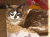 ES SCHNEIT da ist bei unseren Miezen kuscheln angesagt (rentmam1) Tags: cats katzen