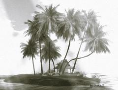PaRadise Of Fawns... (zaziaa resident) Tags: paradiseoffawns sim fawns