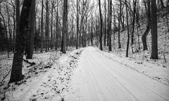 Road through the dunes (mswan777) Tags: dune woods michigan grand mere nikon d5100 sigma 1020mm winter cold road ansel