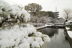 Snow garden (Teruhide Tomori) Tags: 教王護国寺 東寺 京都 世界遺産 日本 五重塔 snow winter 雪 冬 pagoda temple kyoto japan japon landscape worldheritage tojitemple architecture woodenbuilding construction