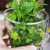 I mint the mood for love.... (martini_lover) Tags: mint plant flora green mojito garden