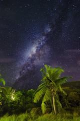 Milky Way – Seychelles Style (2016-08-31) (snjscuba) Tags: seychelles mahe baie lazare kempinski milky way palm tree stars starry night evening galaxy tropics