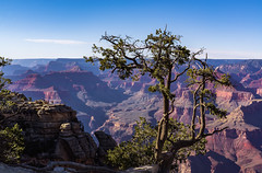 USA Arizona Grand Canyon South Rim (charles.duroux) Tags: nyip new york institut photography