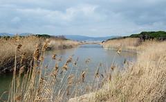 Riera de Sant Climent (tgrauros) Tags: rieradesantcliment catalunya rius