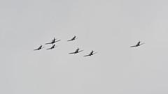 Warbirds over Kent (J @BRX) Tags: hurricane ww2 spitfire mustang raf p51 worldwartwo battleofbritain supermarine royalairforce bigginhill spitfires kh774 pp972 biggin75 battleofbritain75yearsanniversary 23warbirds