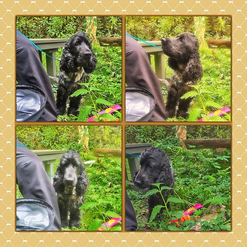Ludvig på tur i skogen den grønne