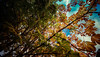 Gradual Autumn (Glenn Cartmill) Tags: uk autumn ireland brown color colour tree green fall leaves canon season eos october unitedkingdom glenn bluesky change northernireland ulster portadown gradual 2015 cartmill 650d coloursofautumn