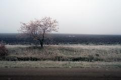 RU2008 伊爾庫次克州 (S.K. LO) Tags: russia easternsiberia irkutskregion