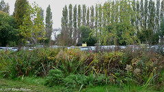Edge of Hills Meadow Car Park (2) (karenblakeman) Tags: uk trees plants october carpark caversham 2015 hillsmeadow