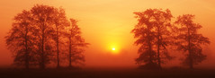 Sun vs. mist (Marc.van.Veen) Tags: trees light red sky orange sun mist tree nature colors fog sunrise landscape pentax nopeople dew smc diffused apeldoorn nofilter k50 diffusedlight