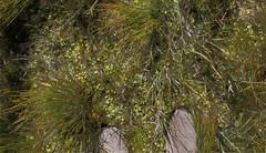 The Bog, Uinta Mountains, Utah, USA  2010 Patrick Alan Swigart, Gone to Look for America (Patrick Alan Swigart) Tags: usa mountains look alan america for utah ut uinta pat patrick gone bog 2010 swigart gonetolookforamerica