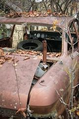 Autowrack (rosaroyale) Tags: herbst bltter verwittert bewachsen autowrack witterung altesauto
