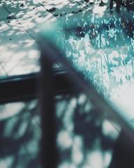 ヤマボウシ 画像25