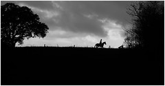 lone rider (Ric George) Tags: trees sky horses horse white black silhouette countryside skies country gloucestershire riding fox rider hunt riders