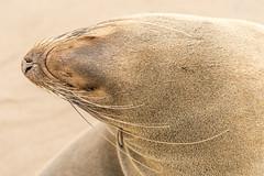 Walvis Bay (catherina unger) Tags: namibia walvis bay animals safari wildlife travel