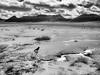 Solitude (claudiov958) Tags: arizona biancoenero blackwhite claudiovaldés mediumformatcamera mediumformatdigital noiretblanc pentax645z pretoebranco blancoynegro czarnyibiały mediumformat schwarzundweiss černýabílý черноеибелое pentaxart landscape surreal