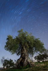 Circumpolar (Hunter bugs) Tags: olivo milenario casabermeja años age nocturnas night photography arroyo carniceros aceite oil maglite 3d circumpolar estrellas nikon d300s nikkor 10105mm