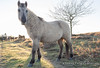 Don't I look beautiful! (Outdoorjive) Tags: other desktop sunsetsunrise flikr winter animals uk places eastanglia norfolk
