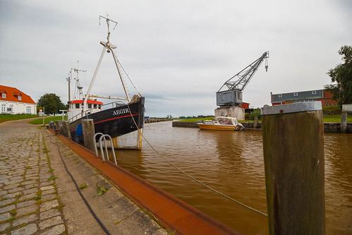 An elder harbour