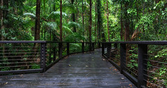 Wanggoolba Creek (Jay Daley) Tags: fraserisland australia queensland rainforest sony a7rll