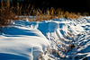 -12 degrees at the border of the forest (TeDi62) Tags: valassko morava czech snow cold winter sunny crispy outdoor forest branky