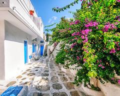 Mykonos (Kevin R Thornton) Tags: d90 nikon travel mediterranean greece cat mykonos alley architecture mikonos egeo gr