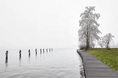 Simplicity (Marijke M2011) Tags: mist landscape trees water serenity mistylandscape outdoor simplicity
