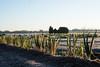 Negi (odeleapple) Tags: nikon d810 afs nikkor 50mm negi morning field