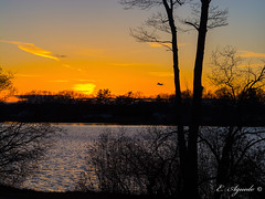 Au revoir (E. Aguedo) Tags: sunset sky trees lake pond warwick rhode island new england ngc airplane sun water winter