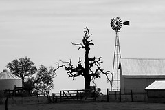 Dark Passages (jan buchholtz) Tags: rural texas windmill tree ranch monochrome janbuchholtz