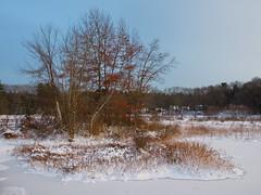 Foxboro Cranberry Bogs 3 (dennisgg2002) Tags: foxboro massachusetts ma cranberry bogs winter new england snow landscapes