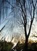 A winter cold (mikael_on_flickr) Tags: awintercold winter inverno vinter hiver ice ghiaccio denmark danmark danimarca tree birch albero betulla træ birk is