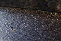 Lone Fishing (ScottScott263) Tags: fishing river water scotland spey britain