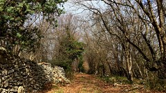 Drywall trail leading to the forest (Istria) 🌲🌲 (dina_cvek) Tags: trail wall drywall nature forest croatia istria istrian