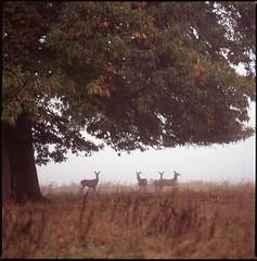 what can the matter be (steve-jack) Tags: hasselblad 501cm fuji velvia film 120 6x6 medium format hertfordshire epson v500